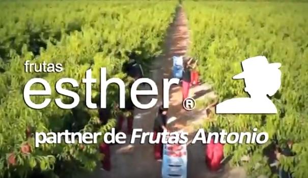 Fresas melocotones albaricoques frutas esther partner grupo frutas antonio