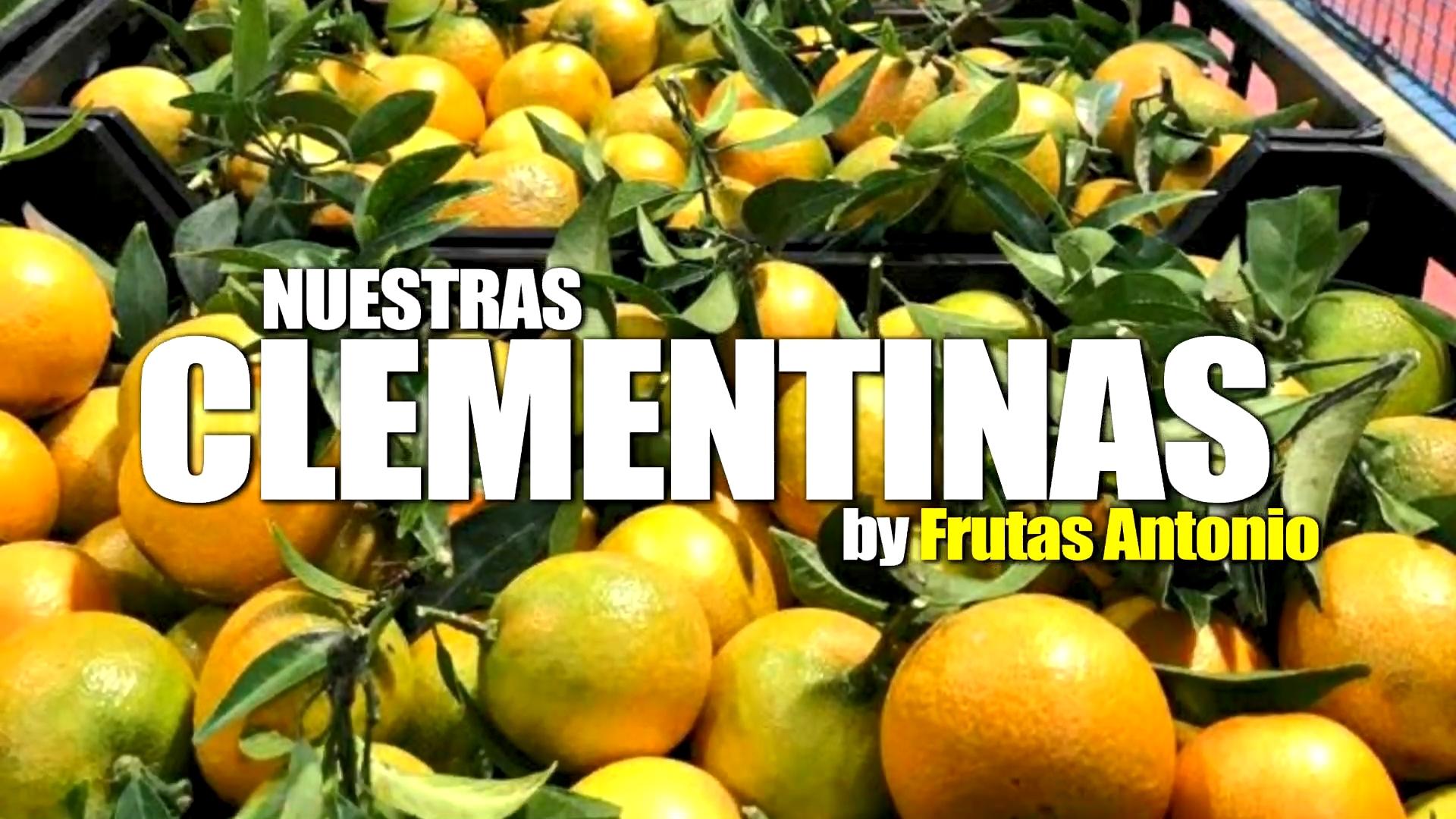 mandarinas de murcia de grupo frutas antonio