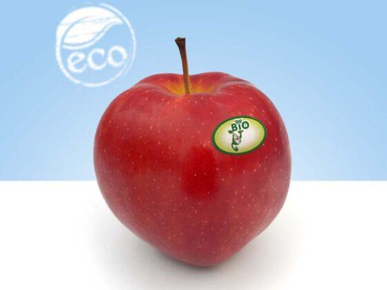 cultivo sostenible y ecologico
