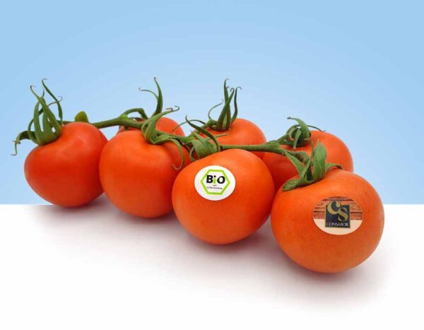 fruta y verdura ecologica biologica
